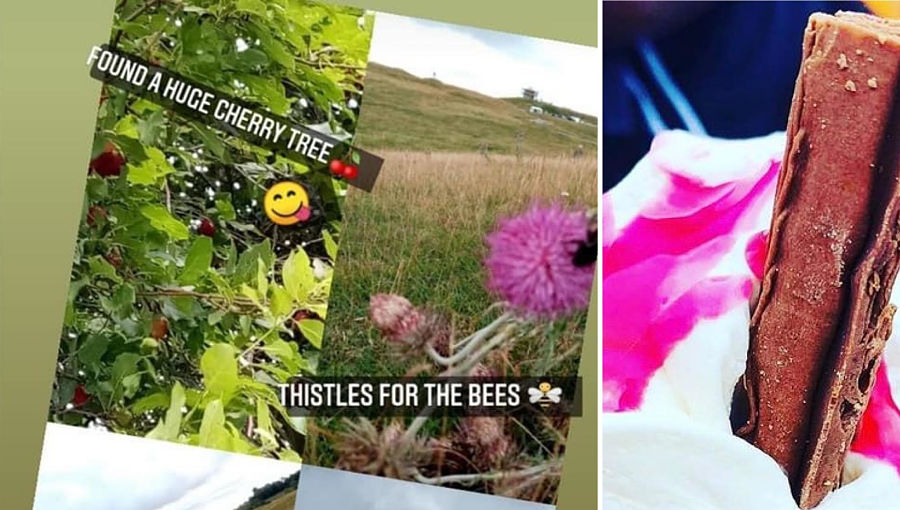 A collage of an ice cream and photos from a summer nature walk with Teenvine