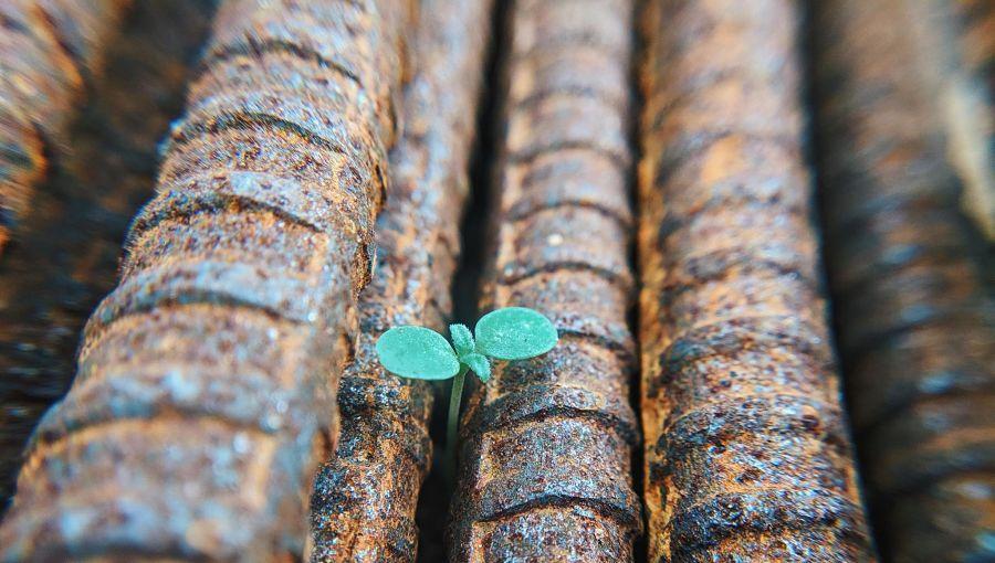 A seedling grows through concrete blocks