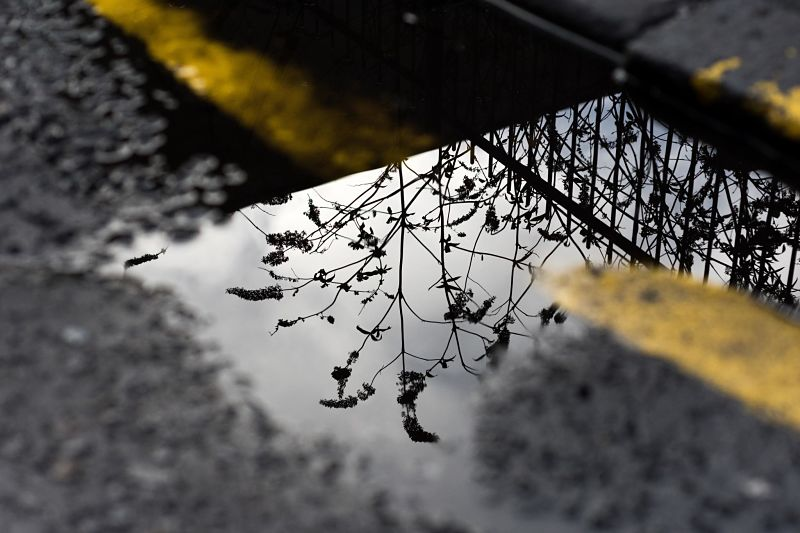Flowers reflected in a puddle on the road