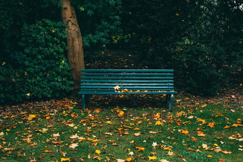 An empty bench in park with autumn leaves on the floor